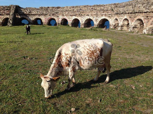 Um pasto para vacas - Free image #343829