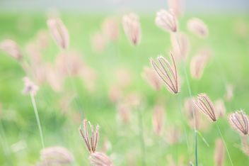 Close-up of spikelets on green background - Free image #343849