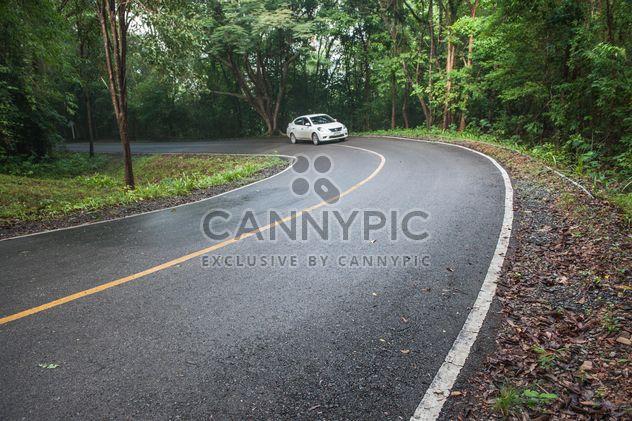 Route à travers la forêt - Free image #343909