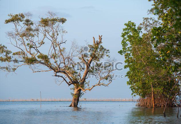 Дерево, торчащие из воды - бесплатный image #344089