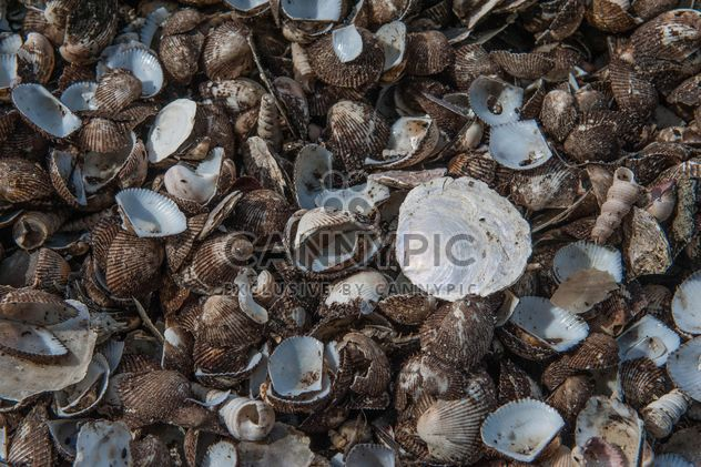 Sea shell texture - Free image #344109