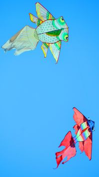 kites in the blue sky - image #344209 gratis