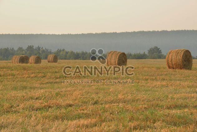 Campo después de vegetación de la cosecha, naturaleza, - image #344219 gratis