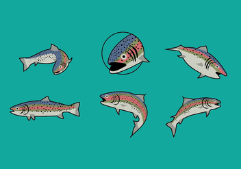 Rainbow Trout Illustrations - Free vector #344829