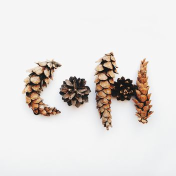 Pine cones on white background - Free image #345029