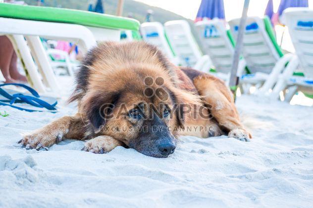Allein Hund liegen am Sandstrand - Free image #346189