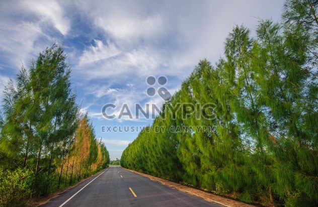 Country road with beautiful nature - Free image #347199