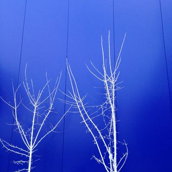 White trees on background of blue building - бесплатный image #347819