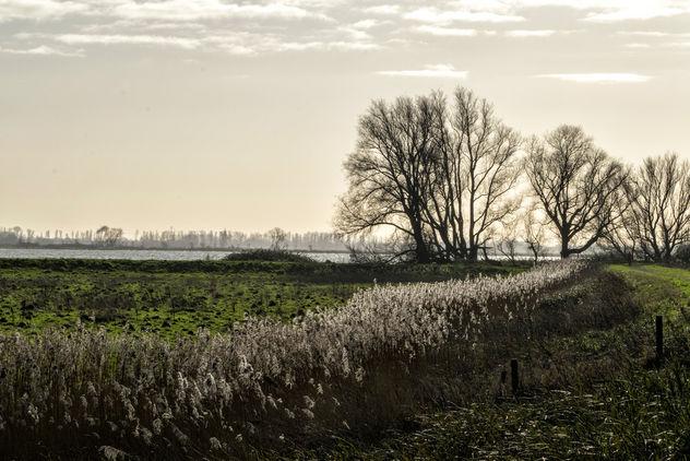 Sunlight in the reed, Tongplaat, Dordrecht - image #347859 gratis