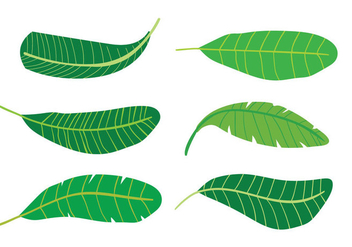 Banana Leaf Vectors - бесплатный vector #348219