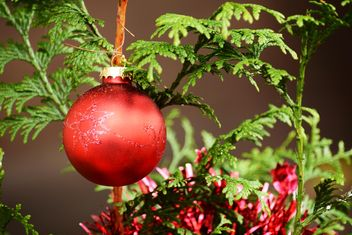 Red Christmas ball on green tree - Kostenloses image #348429