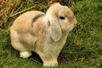 Bunny - Shepreth Wildlife Park - image #355549 gratis