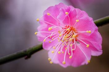 A Sense of Spring - image gratuit #357179