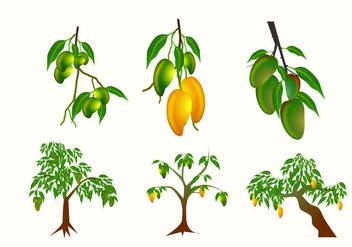 Mango Plant Vector - Kostenloses vector #357759