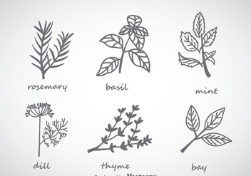 Herbs And Spices Collection Vector - vector gratuit #357819