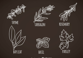 Herbs And Spices Leaves Vectors - vector gratuit #357829