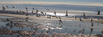 Seagulls on the Go!! - Free image #358749
