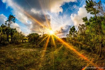 Florida - Free image #359119