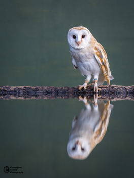 Owl Reflections - image #361739 gratis