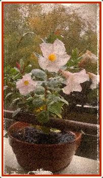 Fleurs de balcon - бесплатный image #363649