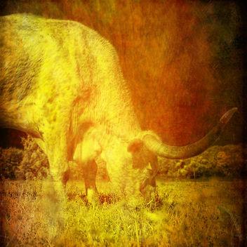 longhorn steer - Free image #364249