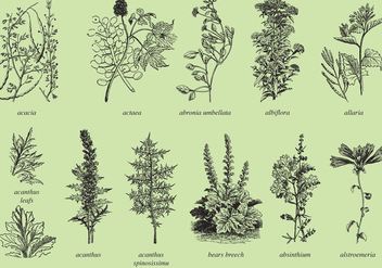 Medicine And Ornamental Plants - Free vector #364719