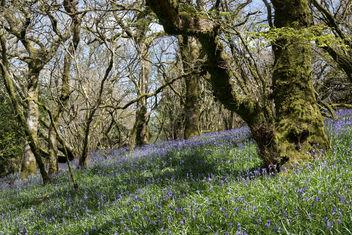 Spring Woodland - Free image #366009