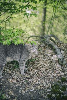 Tiger - image #366359 gratis