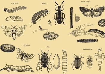 Grow Up Insect Vectors - vector #368969 gratis