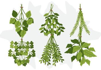 Vector Herb - vector gratuit #369659