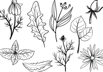 Free Herbs Vectors - Free vector #370059
