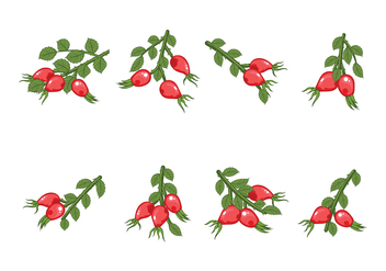 Free Rosehip Vector - Free vector #370829