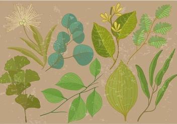 Eucalyptus Leaf - Free vector #376299