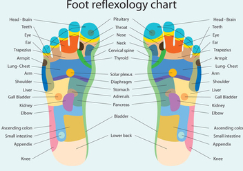 Foot Reflexology Chart - vector #378559 gratis