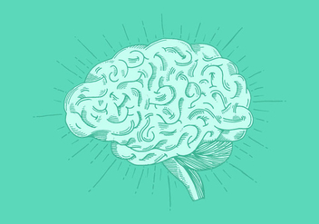 Bright Hand Drawn Brain Vector - Free vector #380829