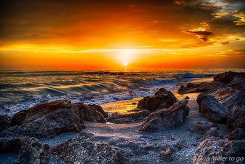 Florida Gold - image gratuit #381249