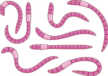 Pink Earthworm Vectors - Kostenloses vector #383209