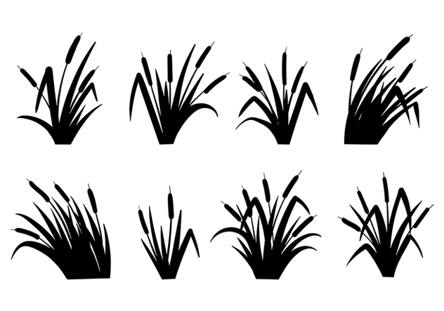 Cattails Vector Black and White - vector #383659 gratis