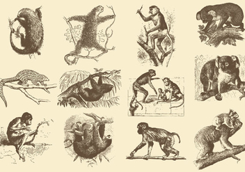 Vintage Illustrations Of Animals - Free vector #388849
