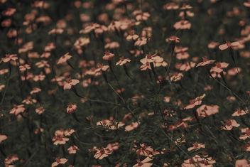 Nature - image gratuit #389409