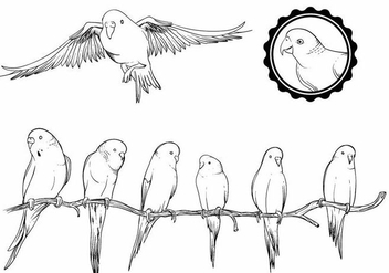Budgie Set - Free vector #390139