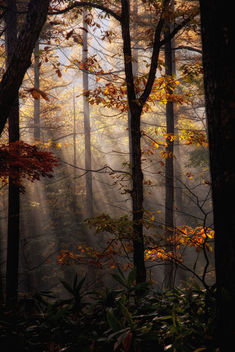Golden forest - Free image #391589