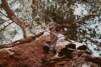 Tree - image gratuit #391729