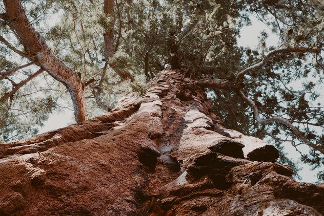 Tree - Free image #391729