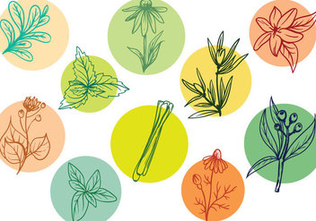 Free Herbs Vectors - Free vector #392679