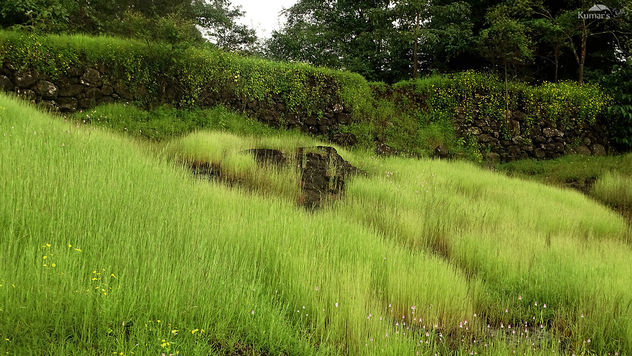 Green Folders All Across West Ghats - Free image #392749