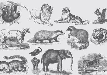 Gray Mammal Illustrations - Kostenloses vector #395329