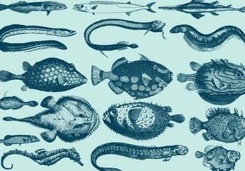 Rare Aquatic Creatures - Free vector #395379