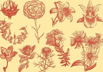 Orange Exotic Flower Illustrations - Free vector #401099