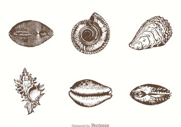 Free Hand Drawn Sea Shells Vector - vector gratuit #403679